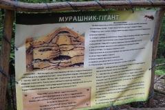 murashnyk