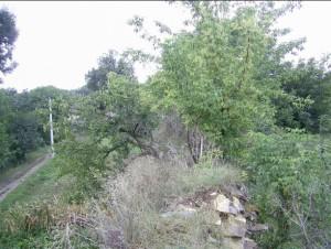 Замкові стіни поросли деревами і кущами