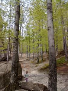 Буковий ліс у Бубнищі