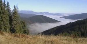 Чивчини в тумані