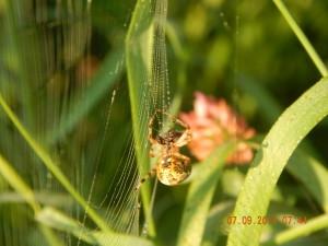 Павук в заповіднику Козакова долина