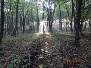 Ліс у Козаковій долині