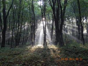 У лісі заповідника Козакова долина