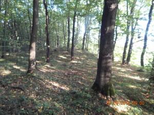 Курган у лісі в Козаковій долині