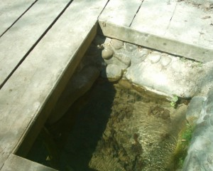 Джерело Франціскові очі в Крилосі витікає з-під вапнякової гори, вода дуже смачна і цілюща