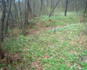 Ліс навесні