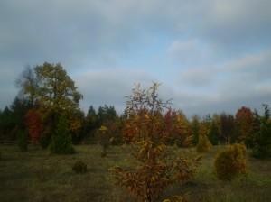 Осінній ліс в Галицькому районі