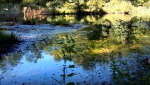 Озеро Лебедин