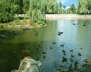 Озеро з качками у Парку Шевченка