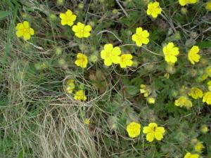 Квіти на Вовчинецькому пагорбі