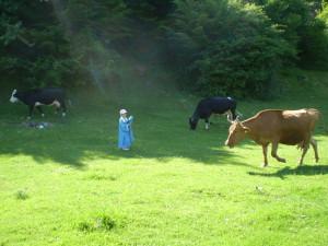 Корови біля Дністра, село Делева