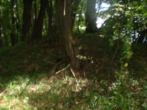 Курган у лісі поблизу Буківної