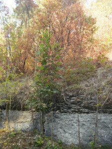 Скелі у лісі в Незвиську