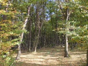 Ліс Борисів біля Підлужжя