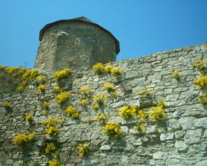 Башта замку у Кам'янці-Подільському
