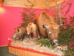 В музеї флори і фауни у Княждворі