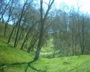 Вал і рів в Крилосі, вкриті лісом, по дорозі від Галичиної могили до Хресної дороги