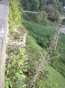 Вид з мурів костелу у Липівці