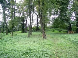 Залишки панського парку біля маринопольського замку