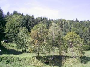 Природа у Яворові