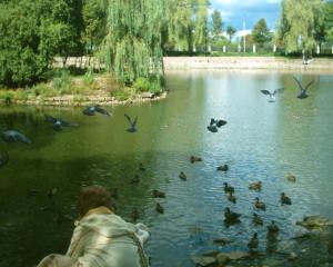 Озеро в парку Шевченка