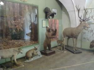 Закарпатські звірі в музеї Ужгородського замку