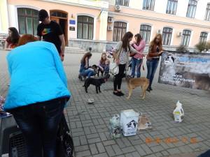 Збір пожерт на Дім сірка на дню міста