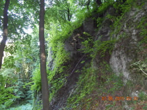 Скеля з плющем