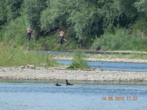 Рибалка на Бистриці Солотвинській біля злиття Бистриць