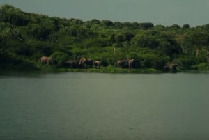 Слони на березі Нілу