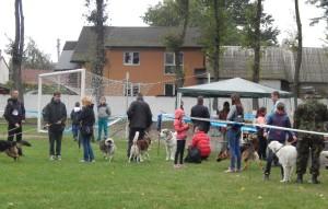 Змагання великих пород на виставці собак