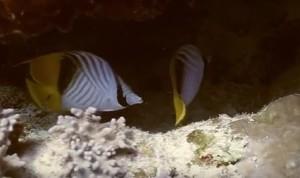 Рыбы в Красном море, Египет
