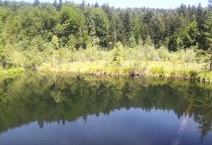 Лісове озеро в сколівських Карпатах