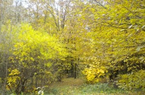Осінній ліс біля Лідихова