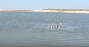 Вода у соленому озері в Генічеську тримає як озеро в Солотвині