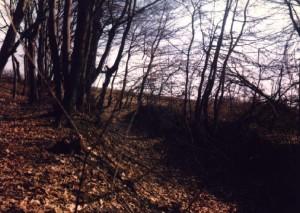 Канава - рів городища, поглиблений під меліоративний канал, такі метаморфози