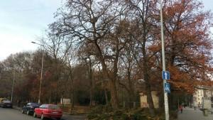 Піонерський парк з вулиці Василіянок