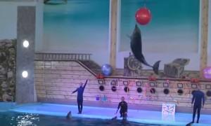 В Трускавце даже есть дельфинарий