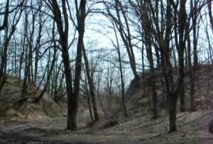 Вал скіфського городища в лісі