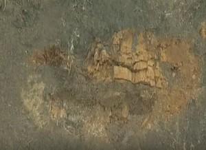 Археологічний шар у розрізі - видно зітліле дерево