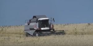 Українські крупи ціняться у всьому світі