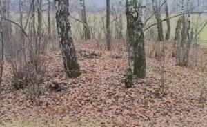 Давньруські кургани в лісі
