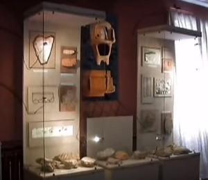 Трипільські старожитності в музеї