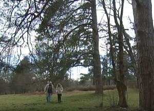 Стародавній парк у селі Рай