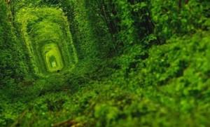 Тунель кохання у Клевані влітку