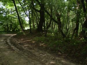 Курган у лісі біля Буківної