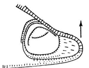Деталізований план городища Медвина