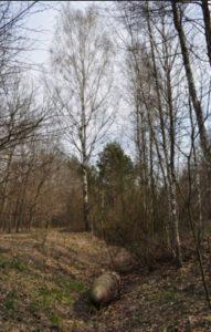 Рів городища у Мирчі