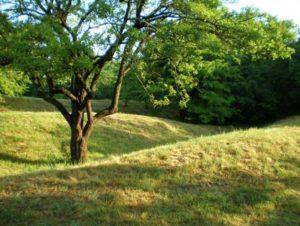 Вали городища на Палієвій горі