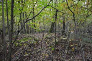 Курганы в лесу